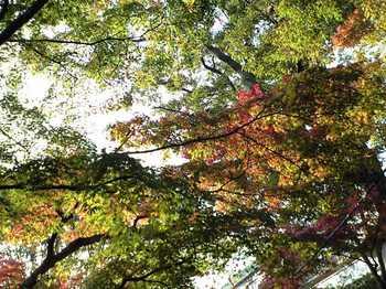 強羅公園 紅葉2009 01.jpg